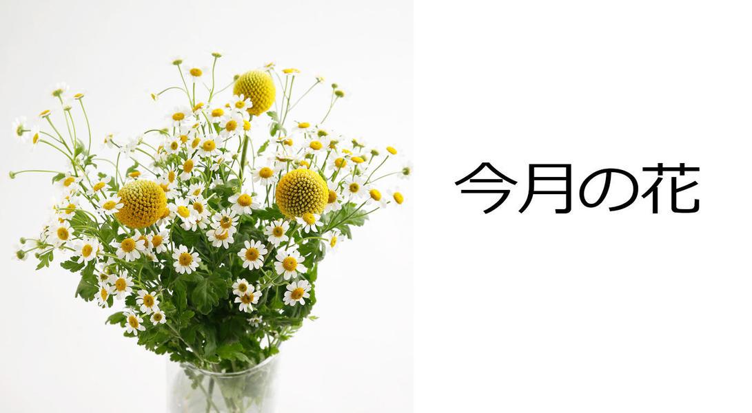 今月の花 マトリカリヤとクラスペディアのブーケ