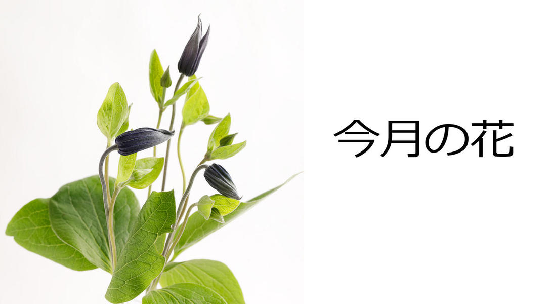 今月の花 クレマチス