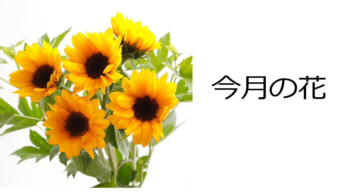 今月の花 ヒマワリのブーケ