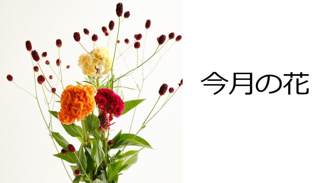 今月の花 ケイトウとワレモコウのブーケ