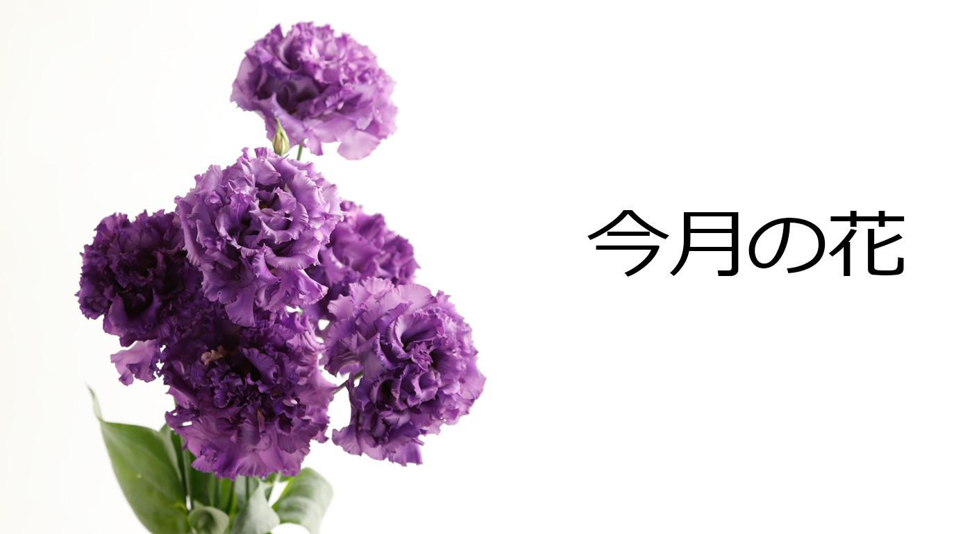 今月の花 トルコギキョウ パープル